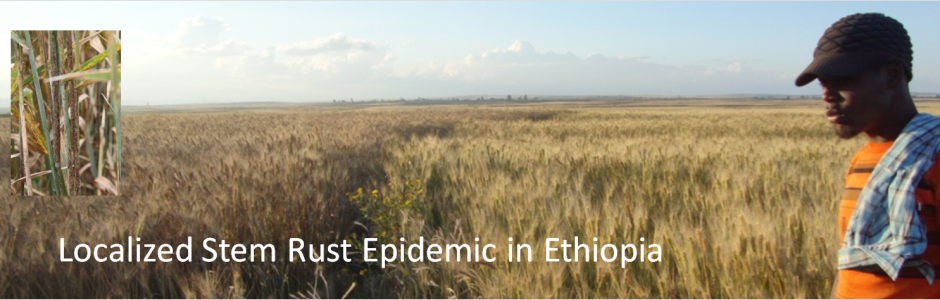 Ethiopia stem rust epidemic