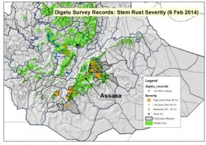 Overview Map: Ethiopia localized stem rust epidemic