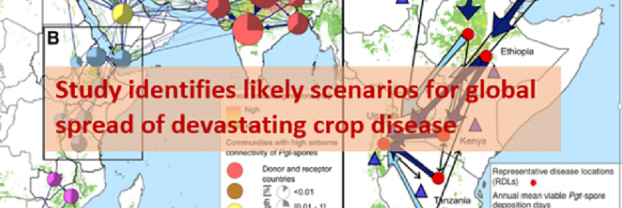 study identifies likely scenarios for global spread of devastating crop disease